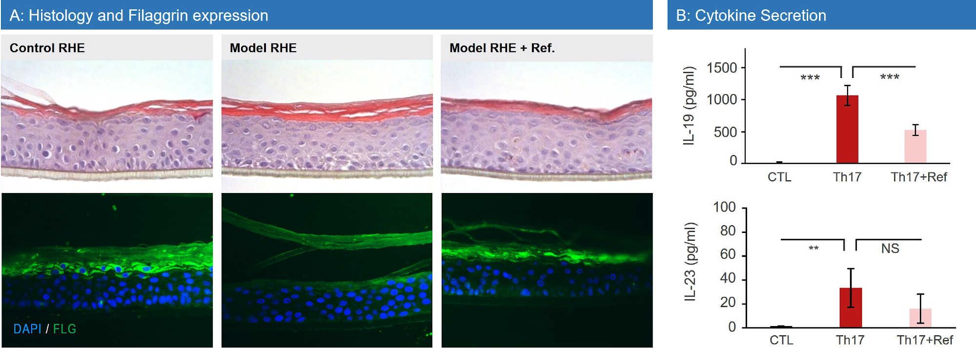 RHE Psoriasis Model Data
