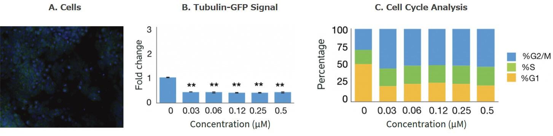 TubulinTracker-example-2