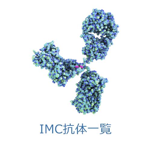 ICM Antibodies