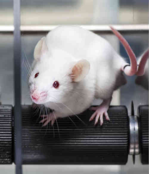 mouse-rotarod
