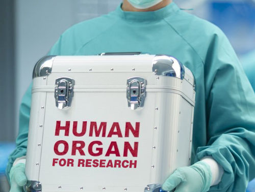 Organ_research